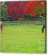 A Couple Horses And Beautiful Autumn Trees Acrylic Print