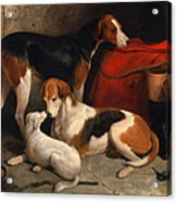 A Couple Of Foxhounds With A Terrier The Property Of Lord Henry Bentinck Acrylic Print
