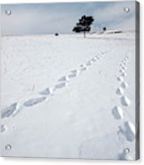 A Couple Walking In The Snow Acrylic Print