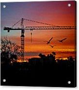 A Crane And Three Birds Acrylic Print