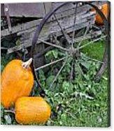 A Crop Of Pumpkins Acrylic Print