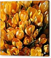 A Crowd Of Crocuses Acrylic Print