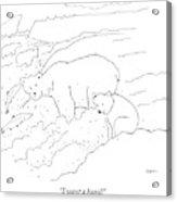 A Cub Polar Bear Exclaims While Family Hunts Acrylic Print
