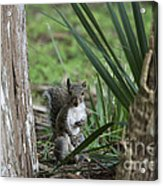 A Curious Squirrel Acrylic Print