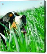 A Cute Dog In The Grass Acrylic Print