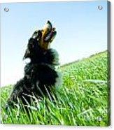 A Cute Dog On The Field Acrylic Print
