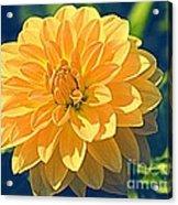 A Dahlia In Autumn Acrylic Print