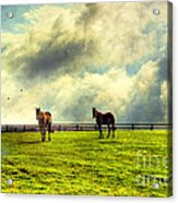 A Day In Kentucky Acrylic Print by Darren Fisher