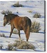 A Day In The Life Of  A Wild Horse  Acrylic Print by Jeanne  Bencich-Nations