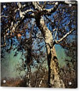 A Day Like This Acrylic Print by Laurie Search
