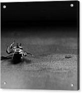 A Dead Bee Acrylic Print