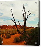A Dead Tree Foreground A Maze Of Rocks Acrylic Print