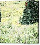 A Deer Hiding In The Tundra Acrylic Print
