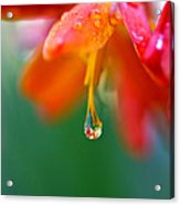 A Delicate Touch - Water Droplet - Orange Flower Acrylic Print