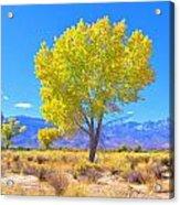 A Desert Autumn Acrylic Print