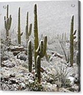 A Desert Blizzard  Acrylic Print by Saija  Lehtonen