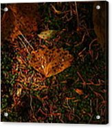 A Dew Covered Death Acrylic Print