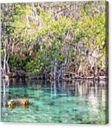 A Dip In The Rainbow Acrylic Print by Bob Jackson