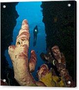 A Diver Looks Into A Cavern Acrylic Print by Steve Jones