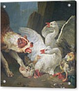A Dog Attacking Geese, 1769 Oil On Canvas Acrylic Print