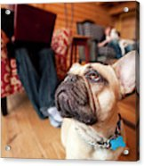 A Dog Stands At The Feet Of Its Owner Acrylic Print