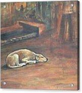 A Dog's Life. Acrylic Print