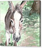 A Donkey Day Acrylic Print