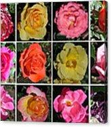 A Dozen Roses Acrylic Print