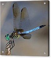 A Dragonfly Iv Acrylic Print