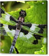 A Dragonfly Warms Up In A Vegetable Acrylic Print
