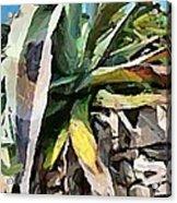 A Dry Agava Acrylic Print