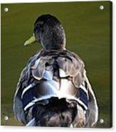 A Duck's Tale Acrylic Print