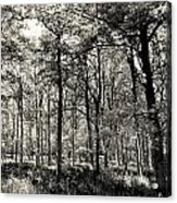 A English Forest Acrylic Print