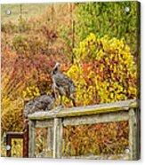 A Fall Photo Acrylic Print