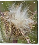 A Feather's Weight In Gold Acrylic Print
