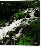 A Fern On An Isalnd  On Wahkeena Creek Acrylic Print