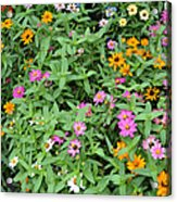 A Field Of Flowers Acrylic Print