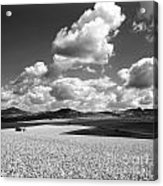 A Field Of Wheat. Limagne. Auvergne. France Acrylic Print
