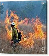A Firefighter Ignites The Norbeck Prescribed Fire. Acrylic Print