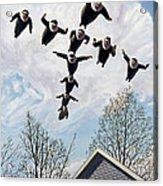 A Flock Of Flying Nuns Acrylic Print