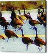 A Flock Of Geese Acrylic Print