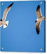 A Flock Of Seagulls Acrylic Print by Jason Brow