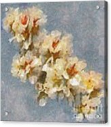 A Flourishing Cherry Branch Acrylic Print