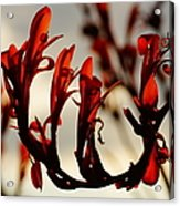 Flamingo Dancer Acrylic Print