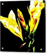 A Flower Acrylic Print