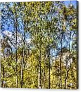 A Forest Glade Acrylic Print