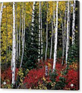 A Forest Of Color Acrylic Print