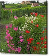 A French Country Church Acrylic Print
