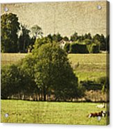 A French Country Scene Acrylic Print