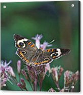 A Friendly Butterfly Smile Acrylic Print